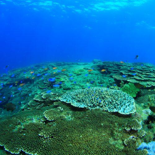 西崎サンゴ